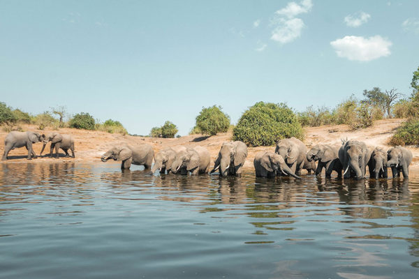 Vastness, isolation, and abundant wildlife from the dry sands of the Kalahari Desert to the lush paradise of the Okavango Delta.